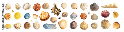 Multicolored Seashells Collection Isolated on White Background Fototapet