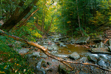 A Creek Tumbles Down A Forested River Valley During October Rains