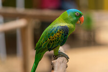 Blue-naped Parrot Perched On The Tree Branch.