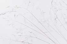 Simple Modern Organic Calm Background With Beige Panicles Of Dry Grass On White Wood Board, Top View.