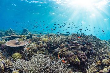 Fototapeta na wymiar Fish swimming above shallow hard coral reef