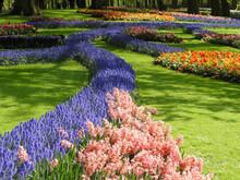 The Path Of Muscari Armeniacum Flowers In The Keukenhof Garden.