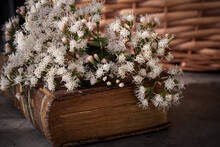 Campestral Setting In Brown Tones Showing An Old Weathered Closed Book With Bouquet Of Wild Fresh Flowers On Top And Picnic Wicker Basket In The Background. Knowledge Or Literature Concepts