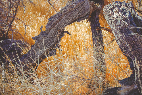 branch in the yellow, arid grass Fotobehang