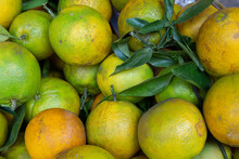 Fresh Oranges At A Market