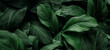 Leinwandbild Motiv The concept of leaves of Cannifolium spathiphyllum, abstract dark green surface, natural background, tropical leaves