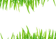 Fresh Spring Green Grass Isolated On White Background With Clipping Path. Summer Green Grass Over White. Green Lawn Isolated.