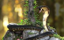 King Cobra (Ophiophagus Hannah) The World's Longest Venomous Snake With Clipping Path, King Cobra Snake, 3d Illustration, 3d Rendering