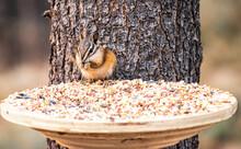 Squirrel Sitting In Feeder Nibbling On Food