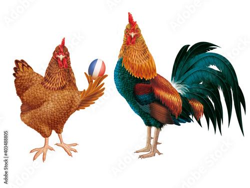 poulet, coq, de france, français, oiseau, oeuf, fière, production, animal, ferme Fotobehang
