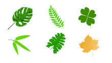 Illustration Of Various Leaf Groups Isolated On White Background.