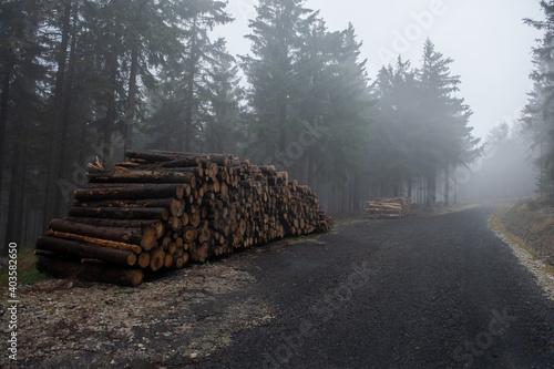 Obraz stos ściętych drzew. Sosny przygotowane do wywozu do tartaku - fototapety do salonu