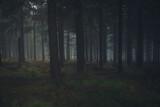 niebezpieczny, ciemny las