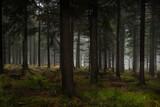 tajemniczy ciemny las. horror