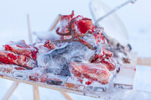 The Extreme North, Yamal, The Preparation Of Deer Meat, Remove The Hide From The Deer,