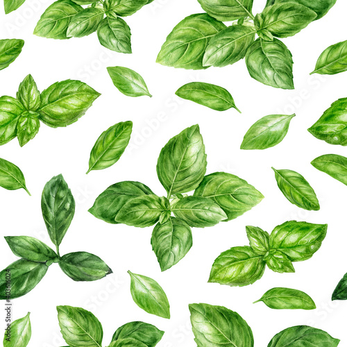 Fototapeta Watercolor seamless pattern basil herb isolated on white background. obraz