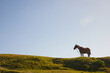 Leinwandbild Motiv Caballo color marrón parado en césped verde con fondo el cielo celeste. Libre en el campo.