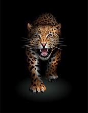 Leopard Walking Toward In The Shadow Illustration
