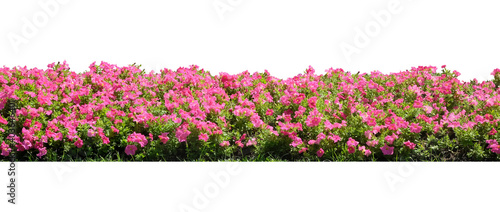 Photo Pink Flowering Shrubs
