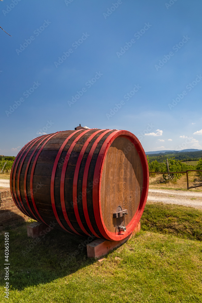 Wine barrel in vineyard, Tuscany, Italy