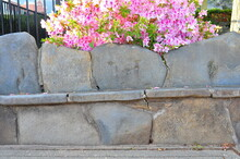 Stone Bench In Spring With George Tabor Azalea ( Southern Indica )