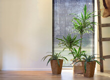 Modern Indoor Green Plants In Woven Basket Retro Interior Near A Window Of Lovely Home, Stylish Room Interior With Various Home Plants Modern Design