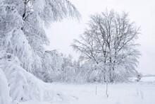 A Wonderful Forest Of Winter Scenery Around Przywidz, Kashubia, Poland