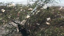 Ecology Disaster Aerial 4K. Green Tree Covered By Plastic Bags From Landfill
