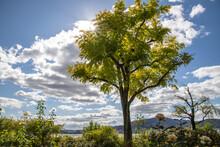 風景素材 秋の穏やかな陽射し