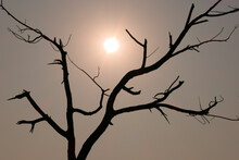 Beautiful Sunset Silhouette Shot Of A Tree Without Leaves With Sun Behind It