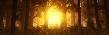 Sunrise In The Forest, Sun Among The Trees, Fairy Forest In The Fog, Trees In The Sun, Morning Park In The Haze,