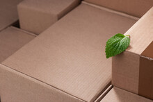 Fresh Green Leaf Among Cardboard Boxes With Copy Space