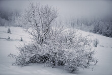 Thüringen   Stützerbach   Wald Im Schnee