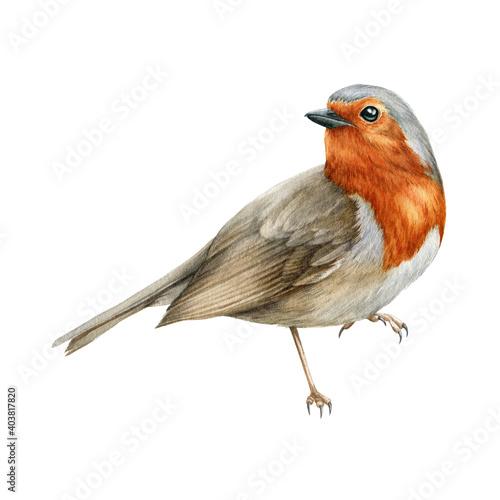 Stampa su Tela Robin bird watercolor illustration
