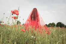 Woman In Red Dress Covered By Thin Tule Standing In Red Poppy Field In Nature
