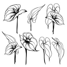 Anthurium Flower Graphic Elements.