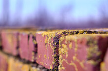Brick Wall Covered By Lichen