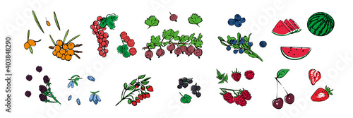 Fototapeta A set of different icons of seasonal berries on a white isolated background. Stock vector illustration. obraz