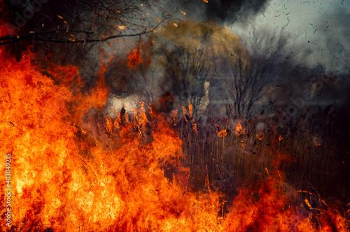 Foto Prescribed Restorative Controlled Burn Consuming Dry Prairie Grass in Late Fall