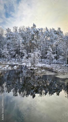 Fototapeta Odbicie drzew w zimowym stawie. Lustro wody. obraz