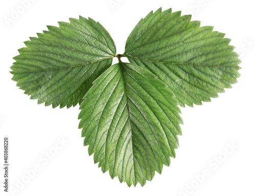 Fototapeta strawberry leaf isolated on a white background