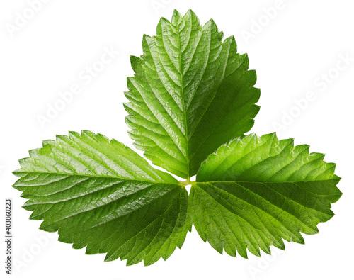 Obraz na plátně strawberry leaf isolated on a white background