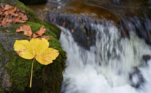 Autumn Leaves On A Stone Covered In Moss Near The Water Stream