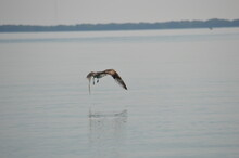 A Bird Flying Over Water