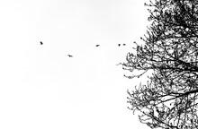 Onde Di Uccelli