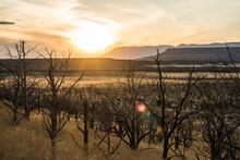 Sunset Over Dead, Burnt Trees In Utah Desert Wilderness