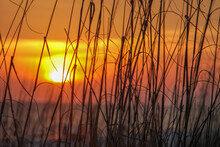 Sunset In The Sea Oats