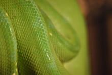 Close-up Of Green Snake Skin