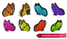 Butterflies Side View Isolated On Transparent Background. Illustration