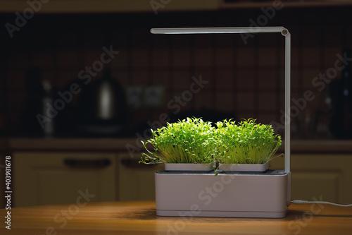 Lamp for growing homegrown microgreens Fototapet